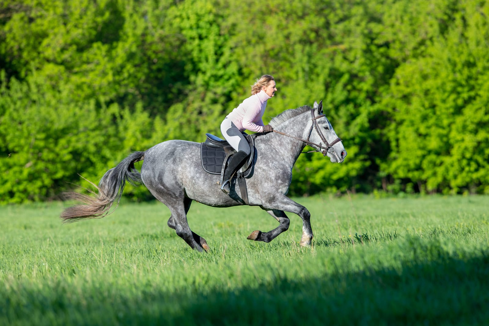 Woman riding a horse in summertime outdoors.