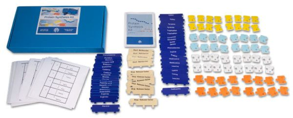Protein Synthesis kit components and box