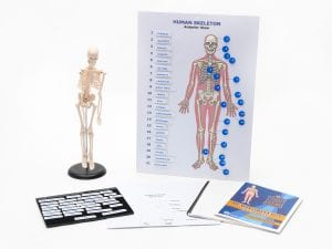 Touch Label and Learn Poster Human Skeleton Kit
