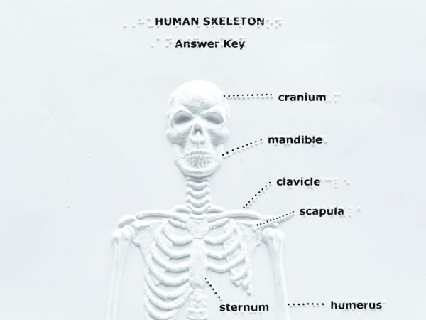 Touch Label and Learn Poster Human Skeleton Answer Key Braille Close Up
