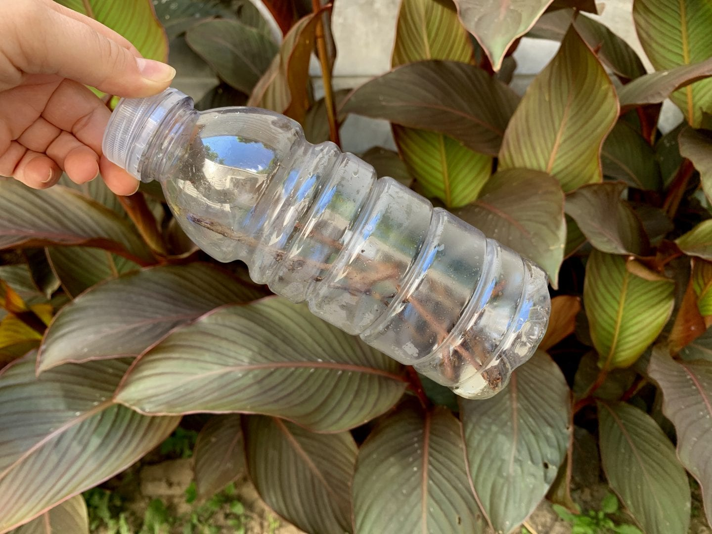hand holding a plastic bottle with sticks and rocks inside in front of green plants