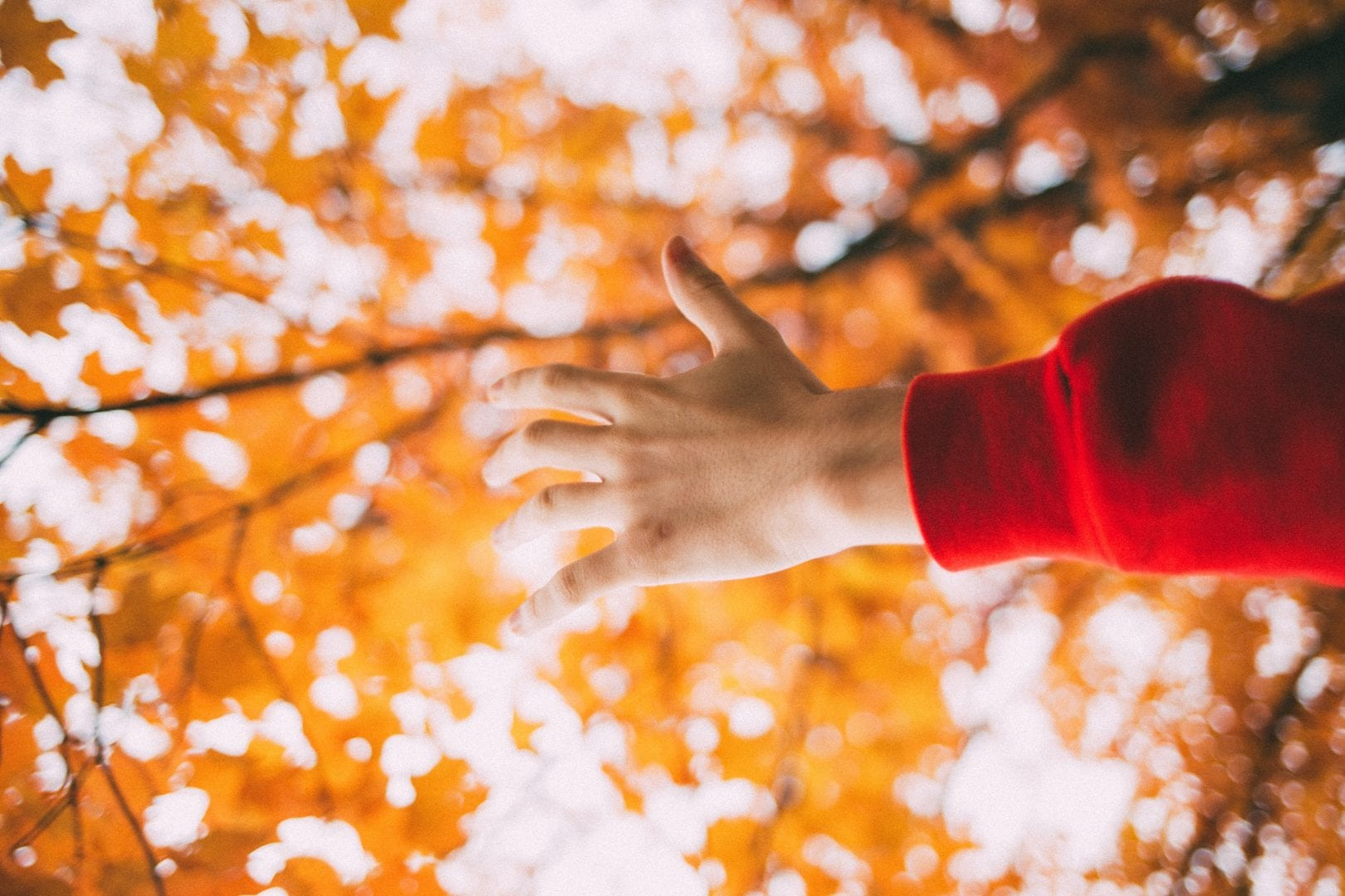 an arm reaching out into the light shining through orange leaves on a tree