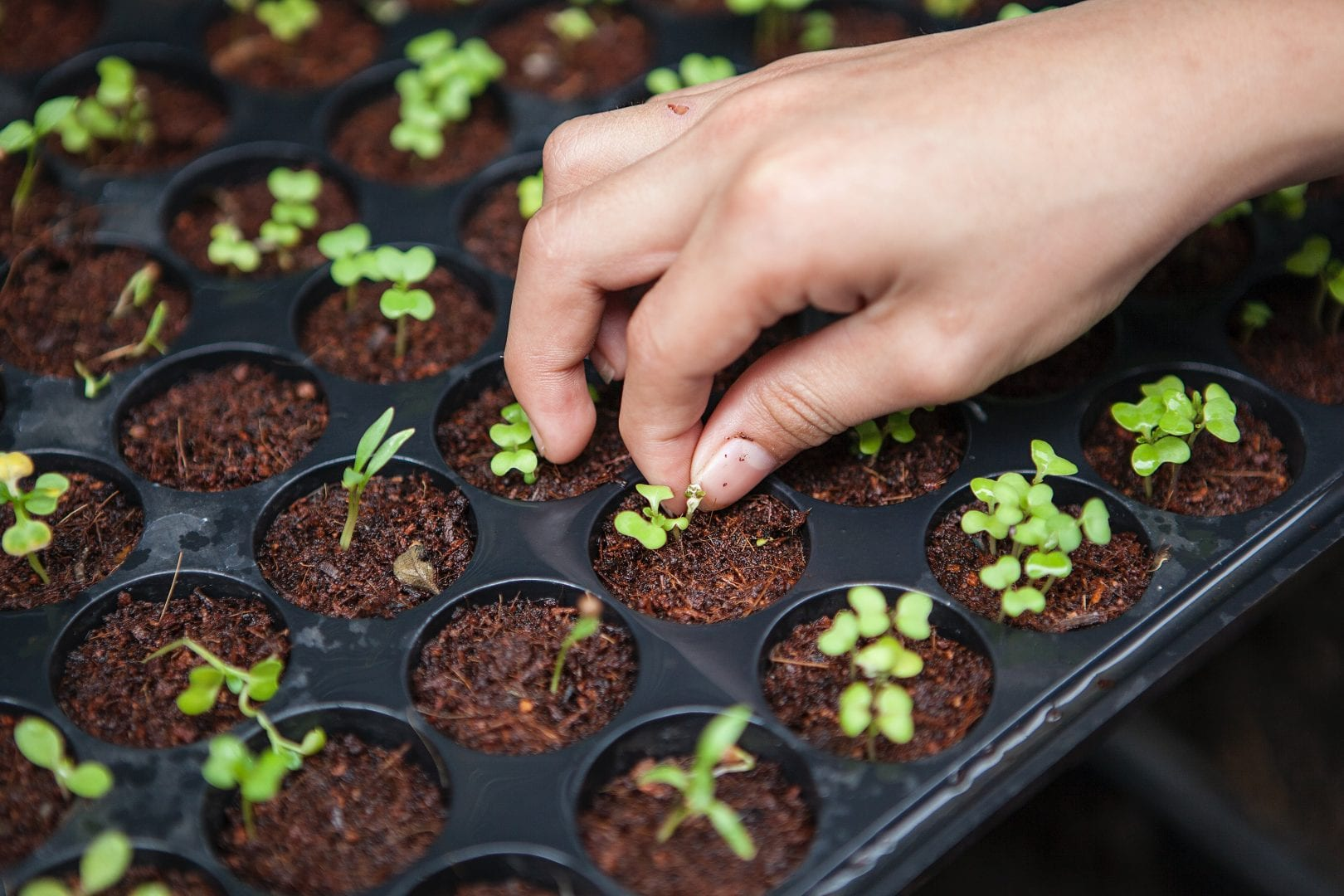 a hand touching one of many small plant seedlings