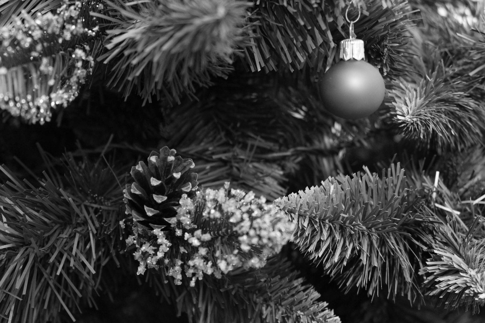 a black and white close up photo of a pine tree and a round ornament