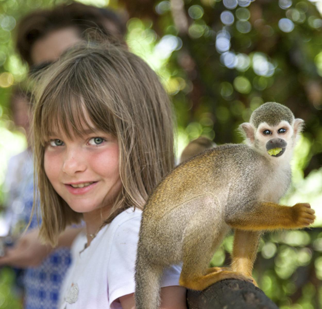 Monkeyland Safari Half Day