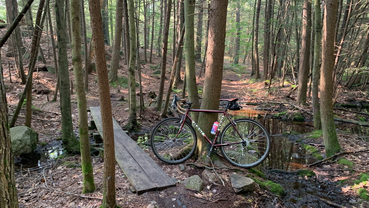 Masi bicycle in the woods