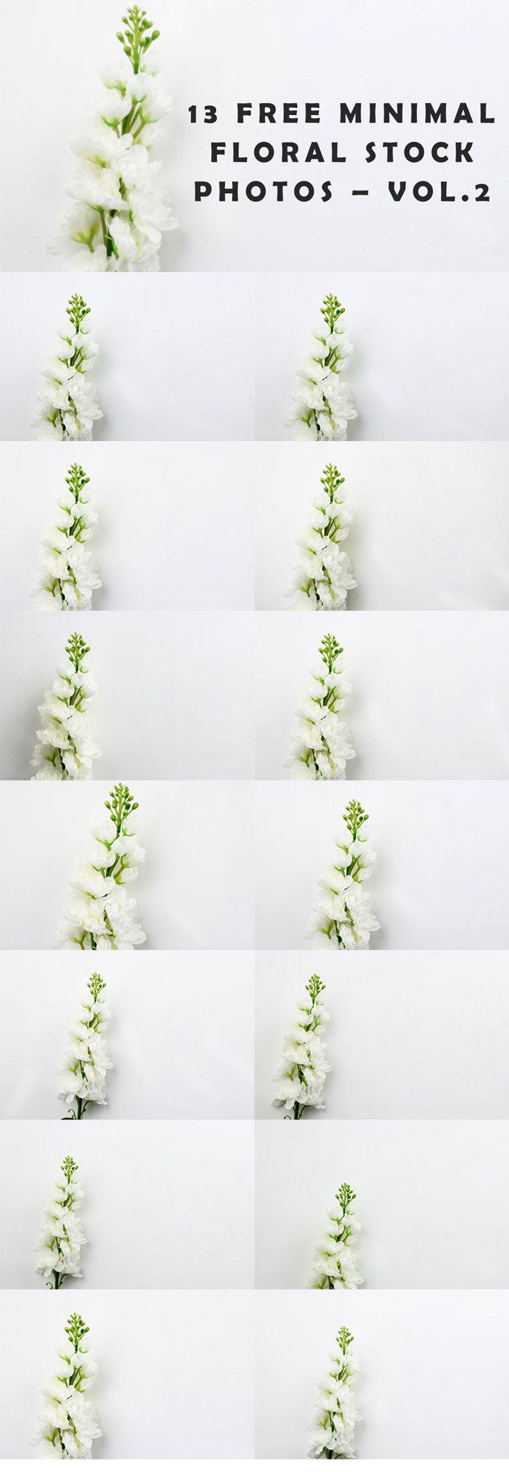 13 Free Minimal Floral Stock Photos – Vol.2