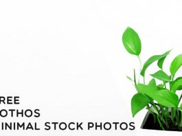 Free Pothos Minimal Stock Photos