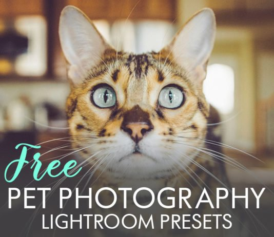 Free Pet Photography Lightroom Presets