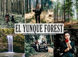 Free El Yunque Forest Lightroom Presets