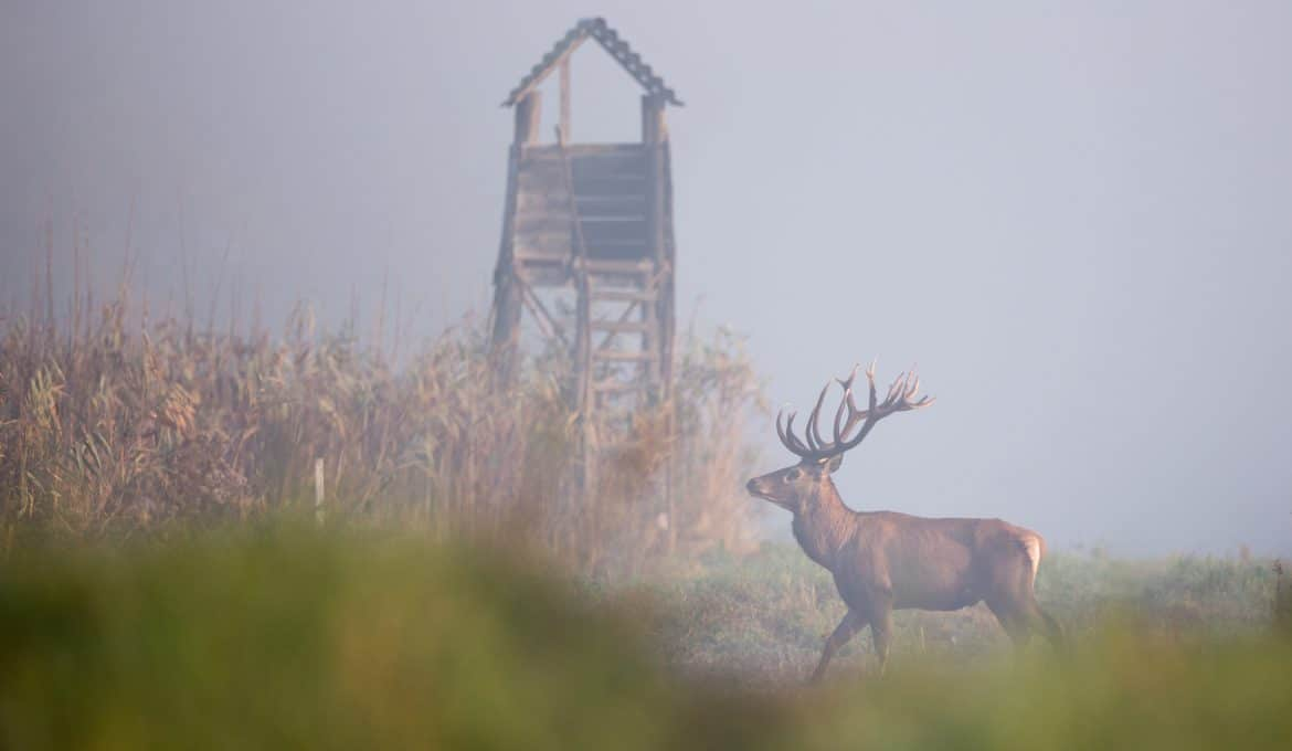 Hunting Licenses: What You Need to Know