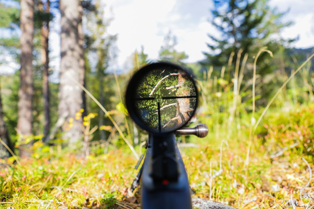 rifle scope view.