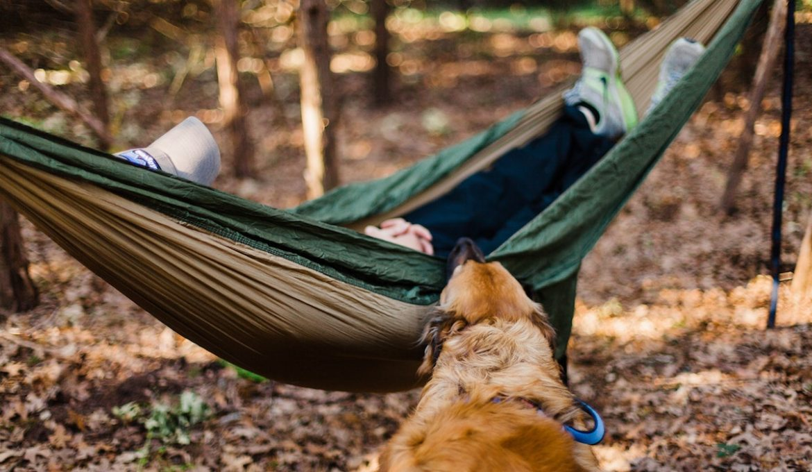 Have Dog, Will Travel: 5 Tips for Adventuring with Your Dog