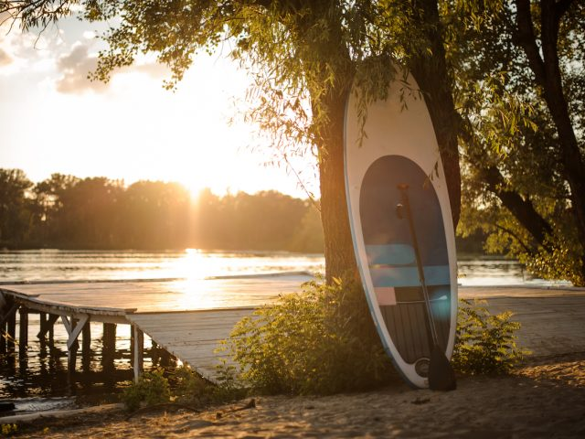 Sup board standing near the tree on the lakeside on the sunset