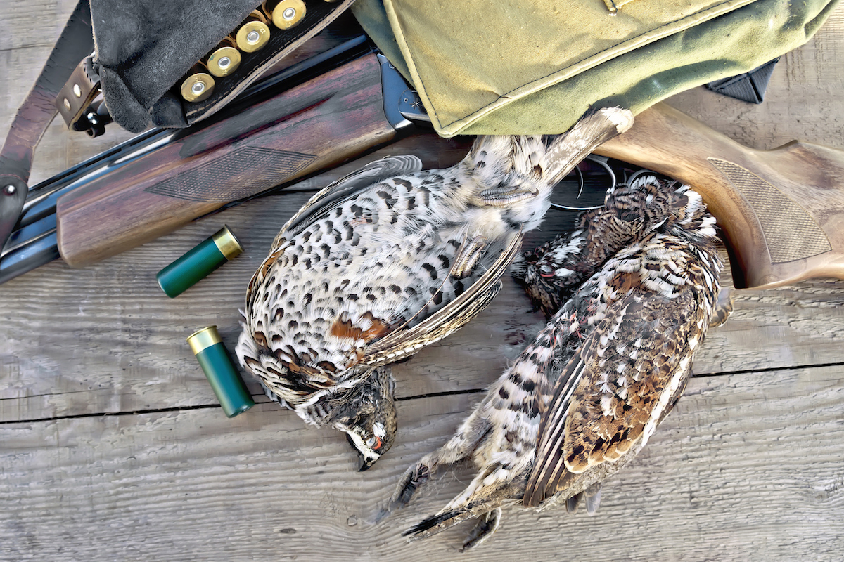 Grouse and rifle with shells on board