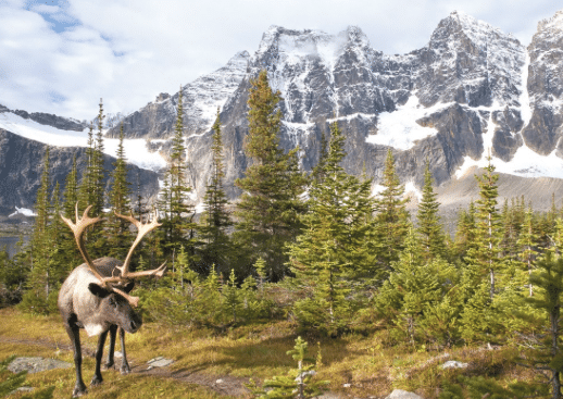 best-fall-hunting-locations-in-the-us-selkirk-mountains