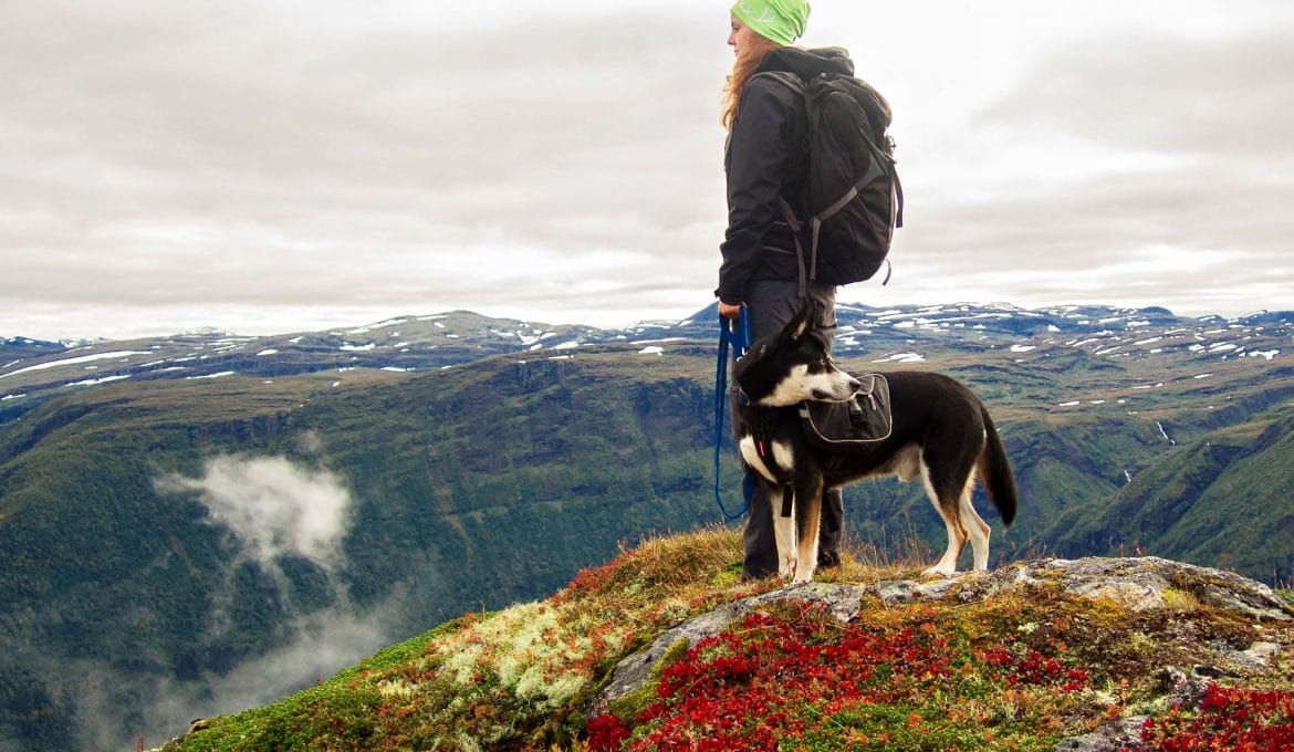 Safety Tips for Hiking With Dogs