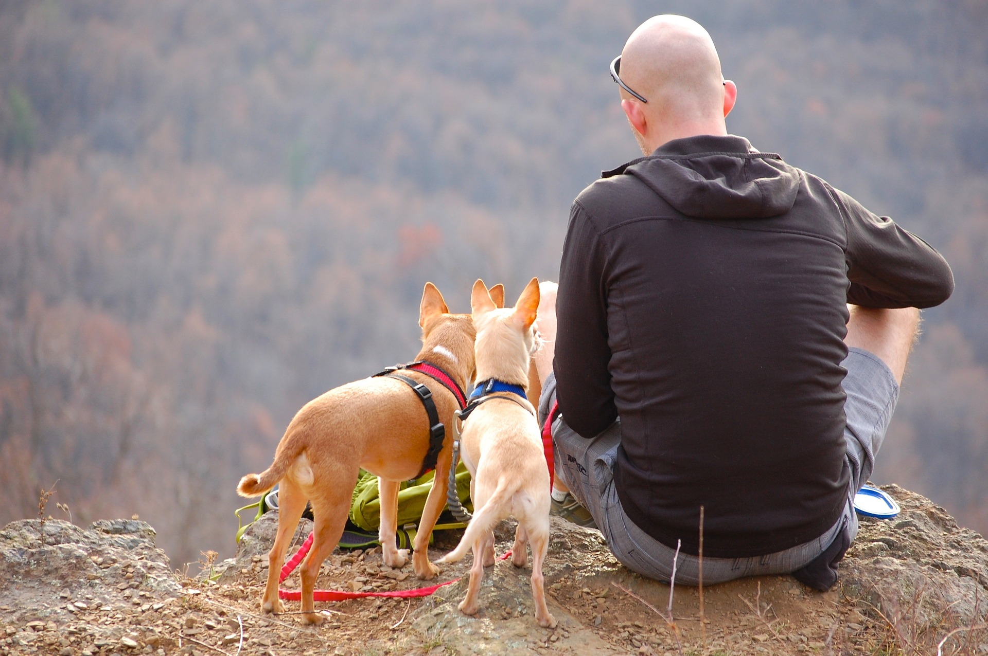 Hiking with Dogs Safely