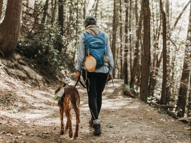 Man's Best Camping Partner: Tips for Camping with Your Dog