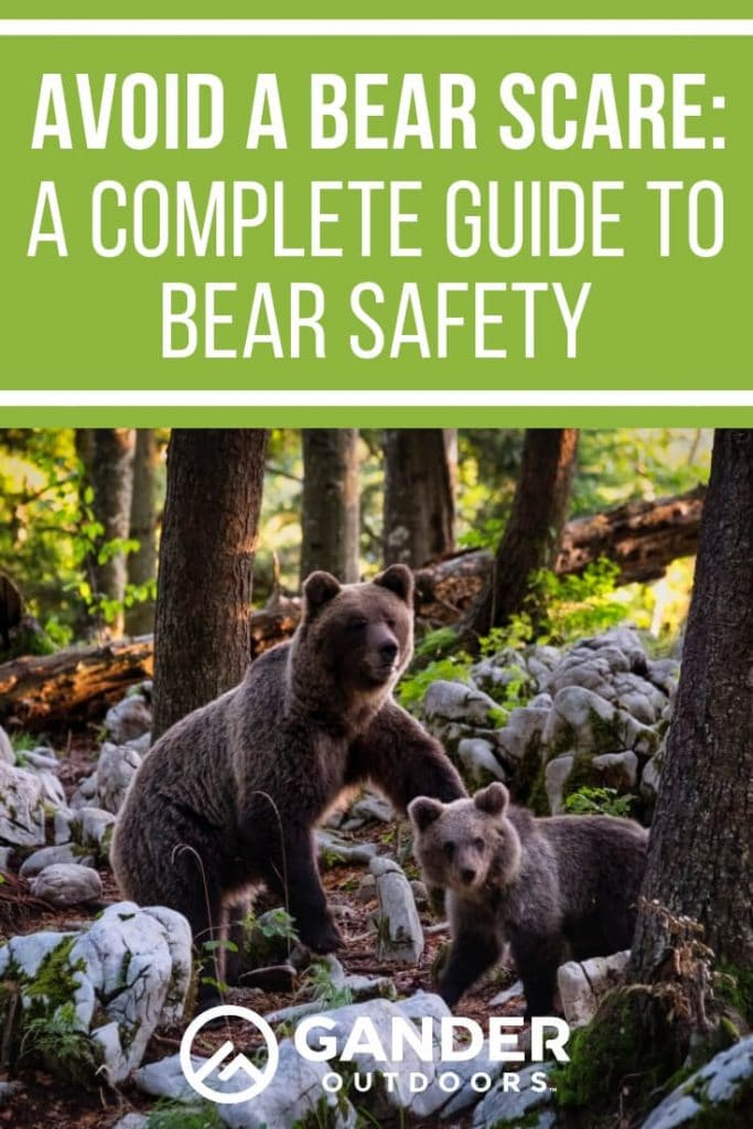 A complete guide to bear safety