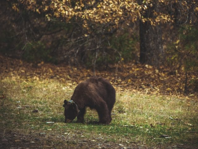 Avoid a Bear Scare: A Complete Guide to Bear Safety