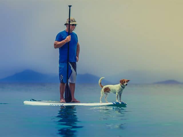 Man on a paddleboard with small white and brown dog