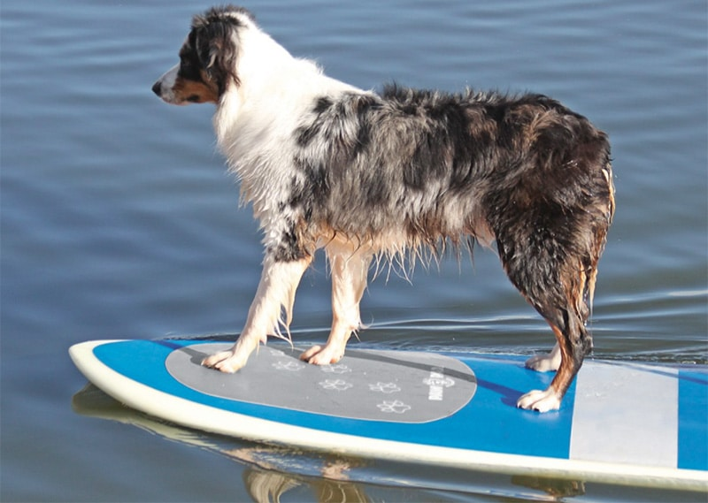 Dog on the front of a paddleboard