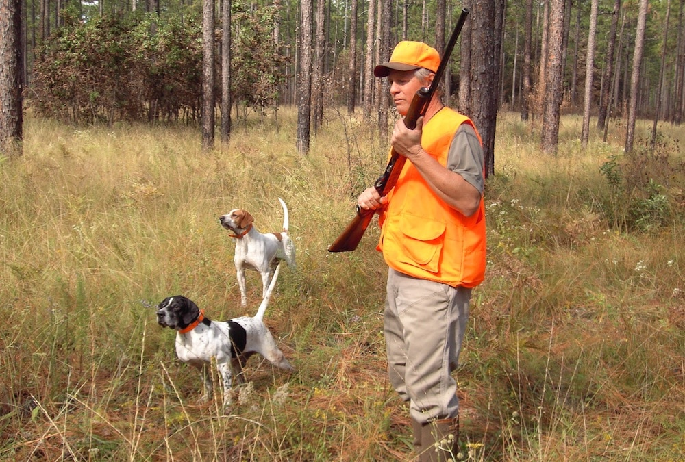 Hunter with hunting dogs