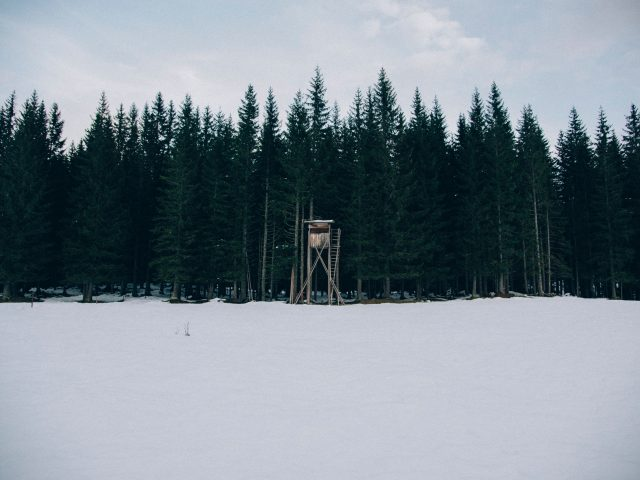 Tree Stand Hunting for Beginners: Tips to Make Your First Hunting Trip a Success