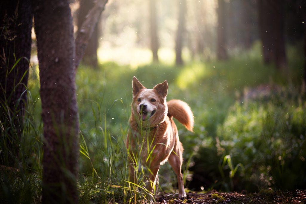 a dog on a trail