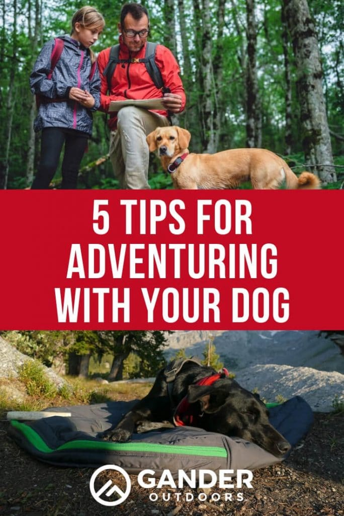 5 tips for adventuring with your dog
