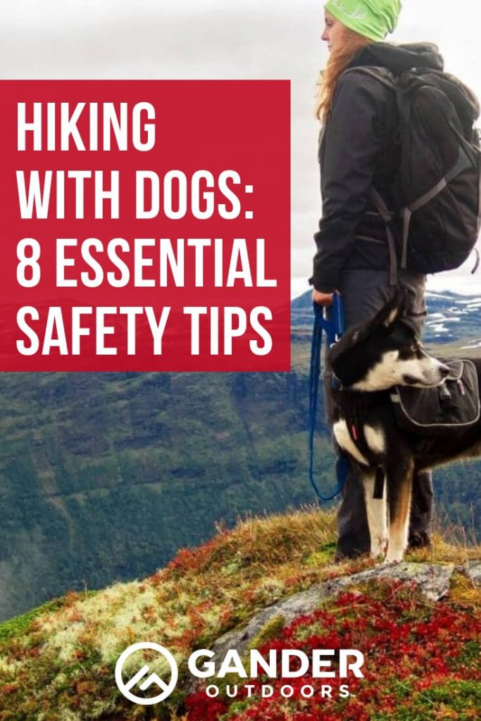 Hiking with dogs - 8 essential safety tips