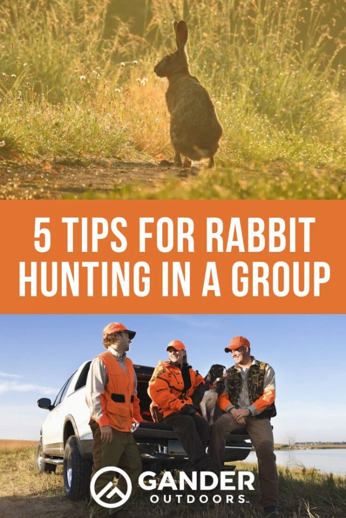 5 tips for rabbit hunting in a group
