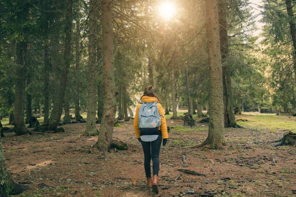 Young woman walking in the coniferous forest.
