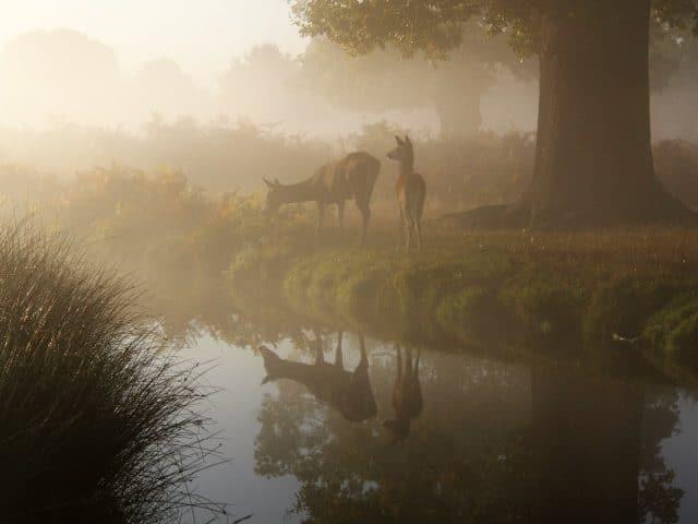 Best Trail Cameras for Deer Hunting Featured Image 2 - PC John Royle via Unsplash