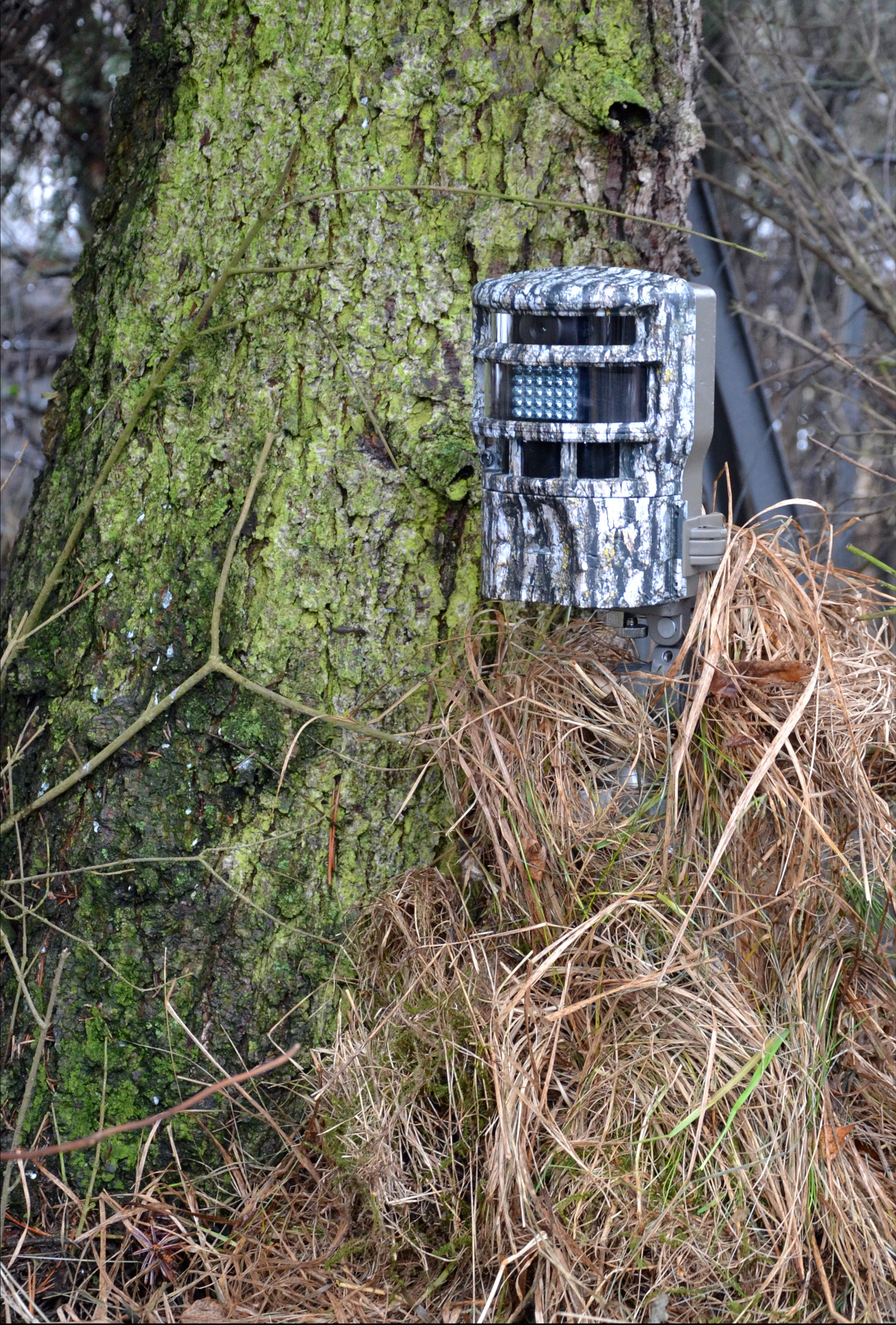 Best Trail Cameras for Deer Hunting Featured Image - PC Tomas Adomaitis via Stockvault