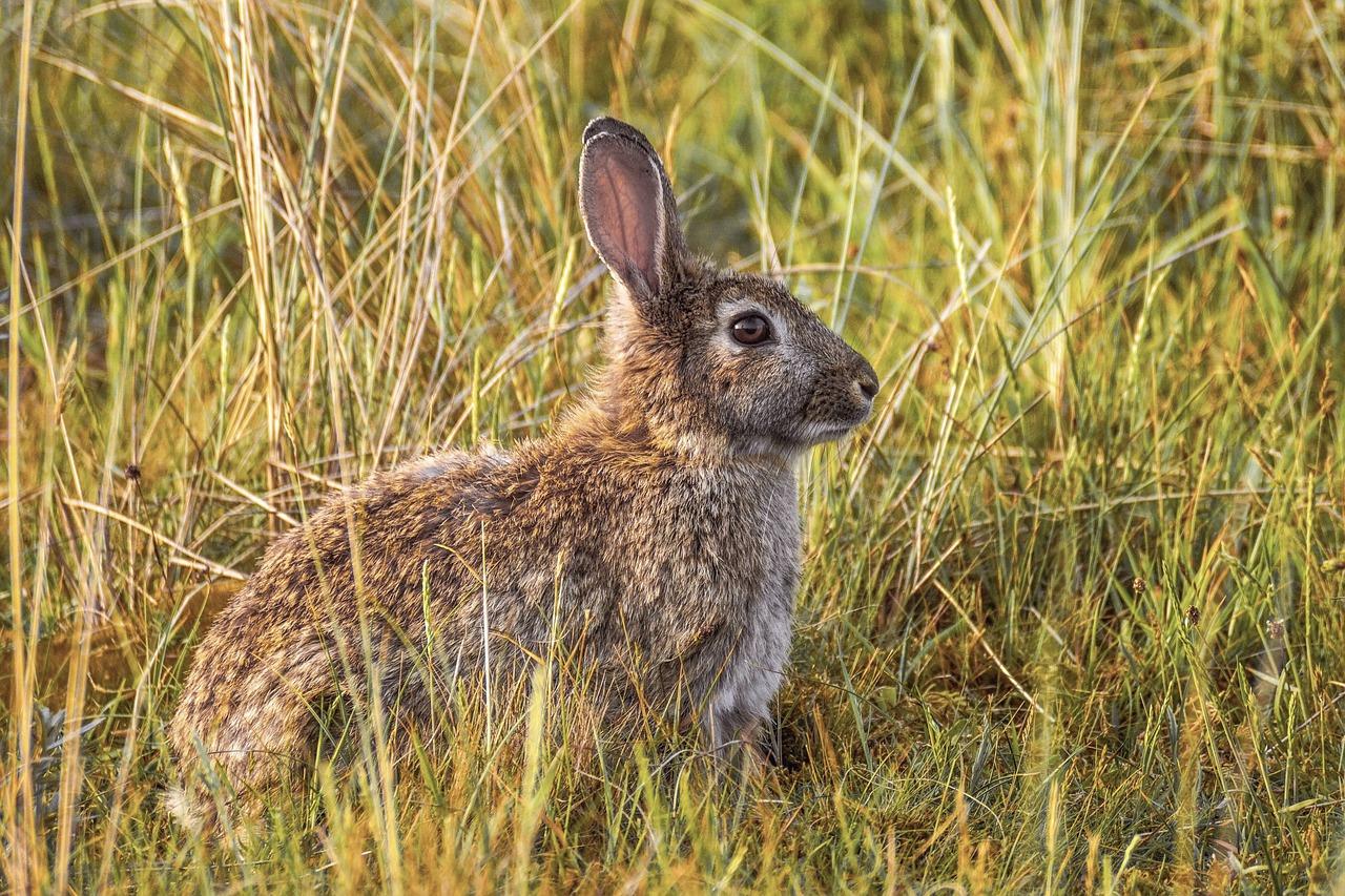 Thinking Rabbit - PC Suju via Pixabay