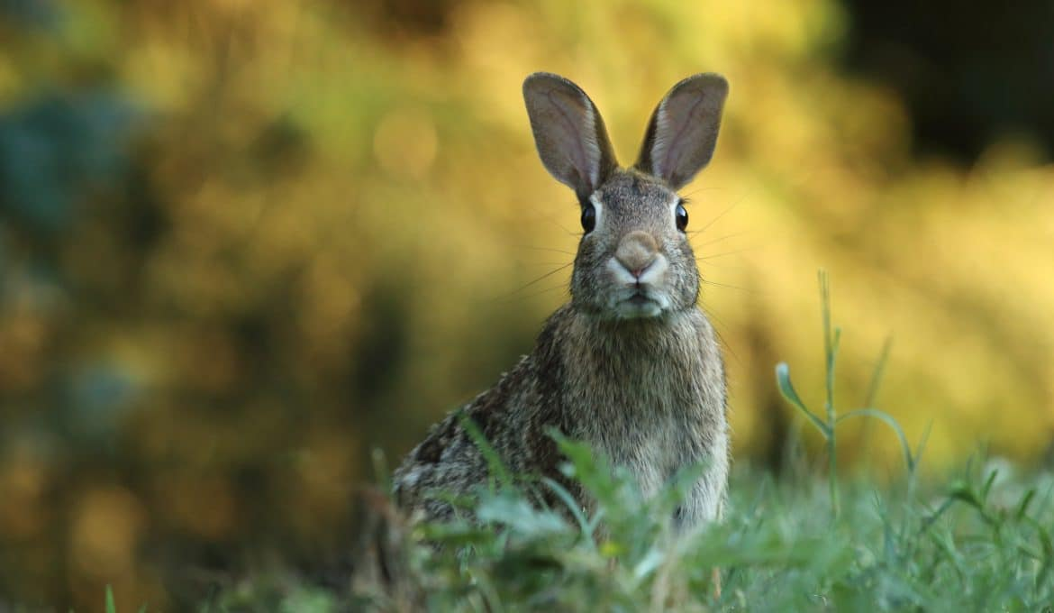 Rabbit Hunting Tips for Beginners Featured Image - PC Gary Bendig via Unsplash