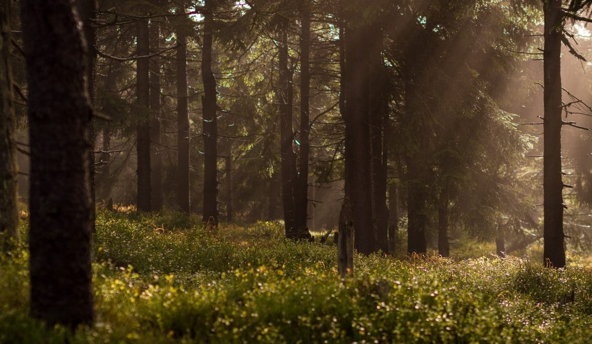 Forest with Streaming Light