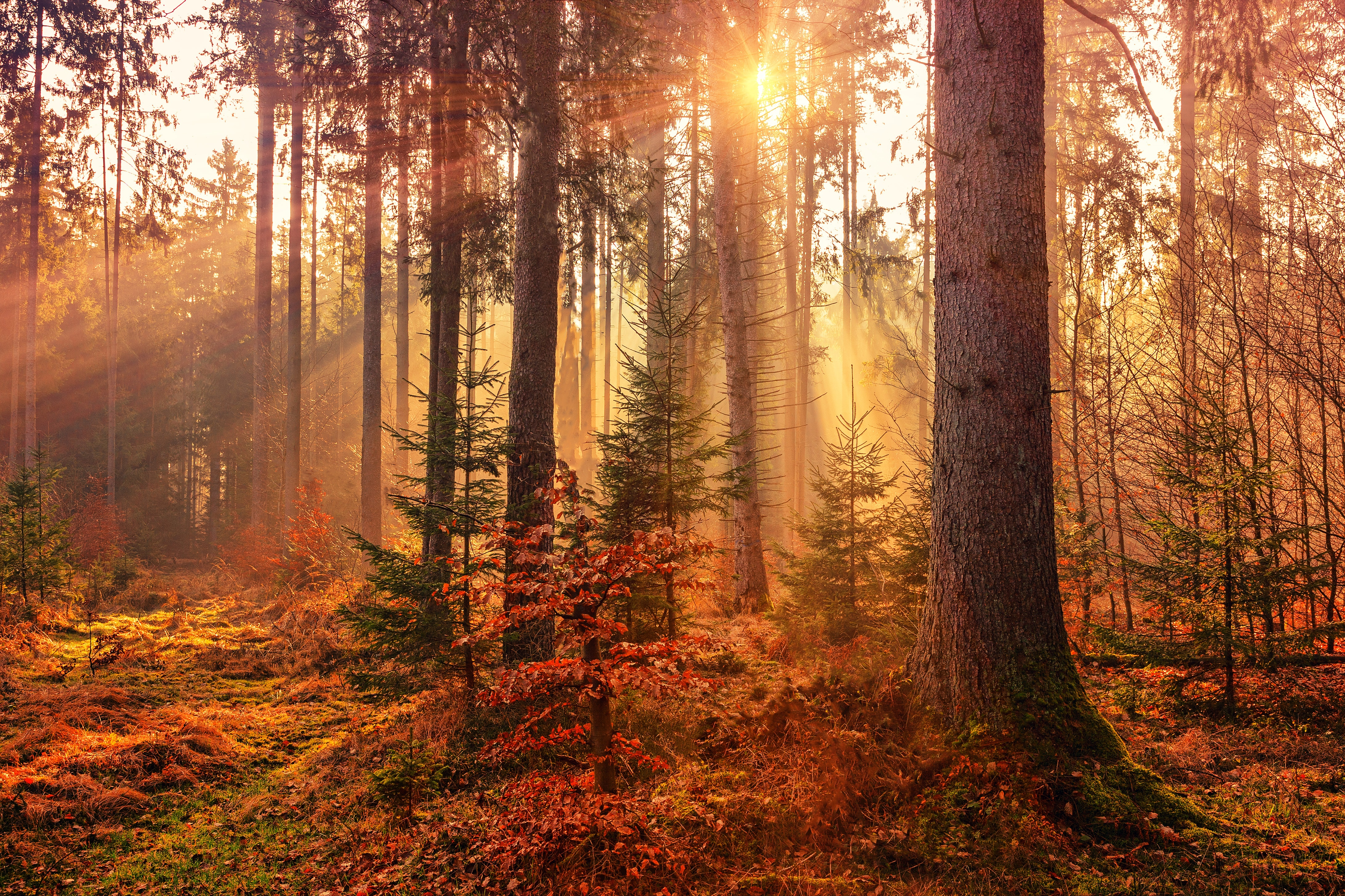 Sunlight Beaming Through Forest