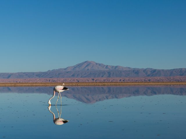 Pink bird in water with mountain in distance