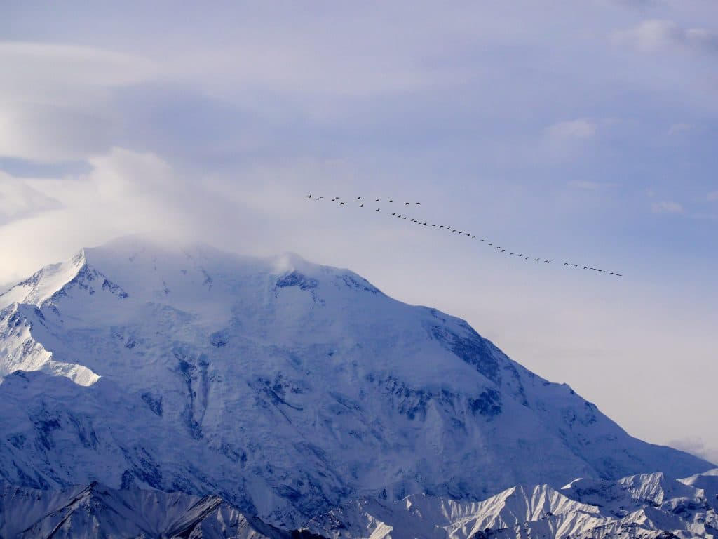 Birds flying over mountain in Alaska