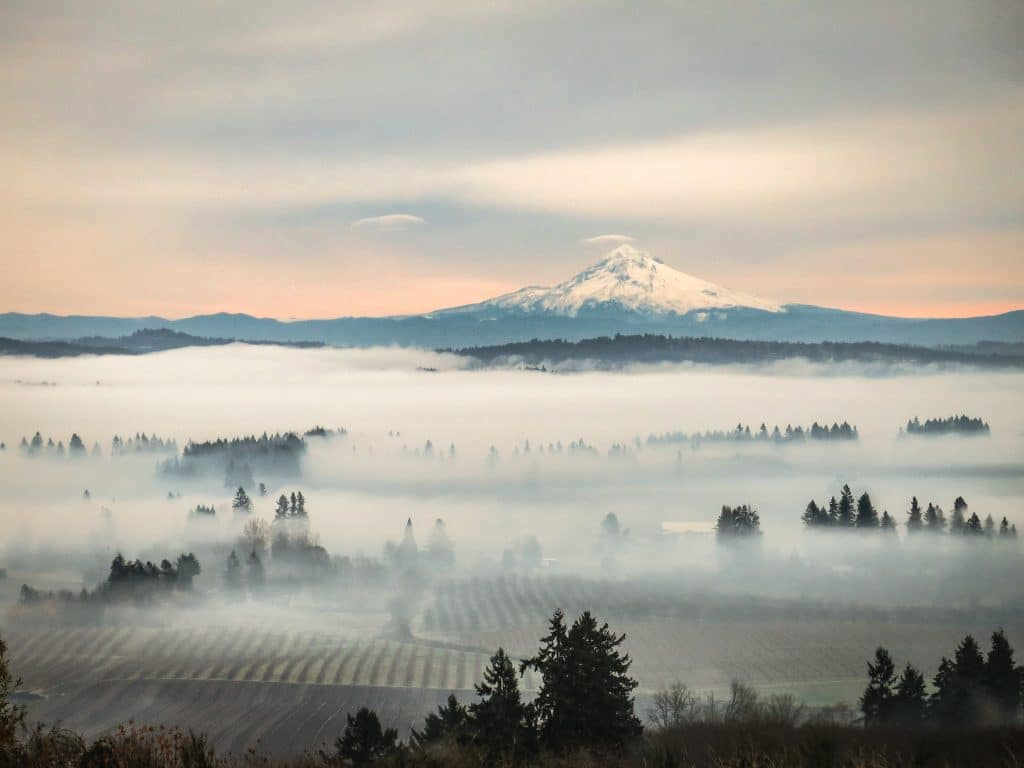 A view of snowy Mount Hood from high above vineyards in the Willamette Valley of Oregon
