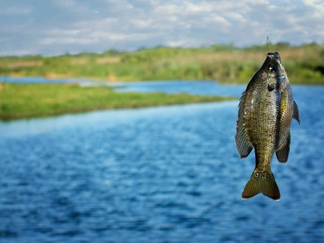 Fall Bass Fishing: Understanding Their Patterns and Habits
