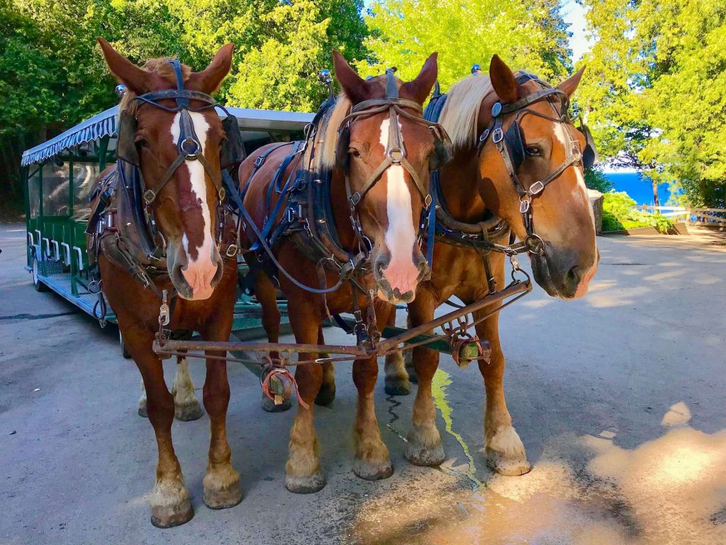 Carriage Rides at Mackinac Island