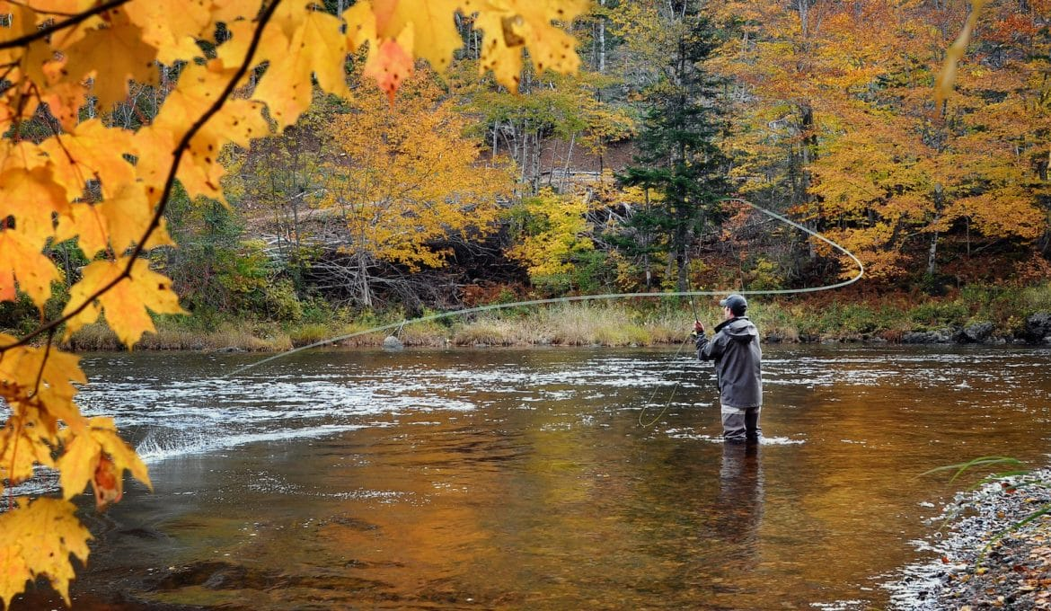 A fly fisherman fishing for Atlantic Salmon on the Margaree River in the fall.