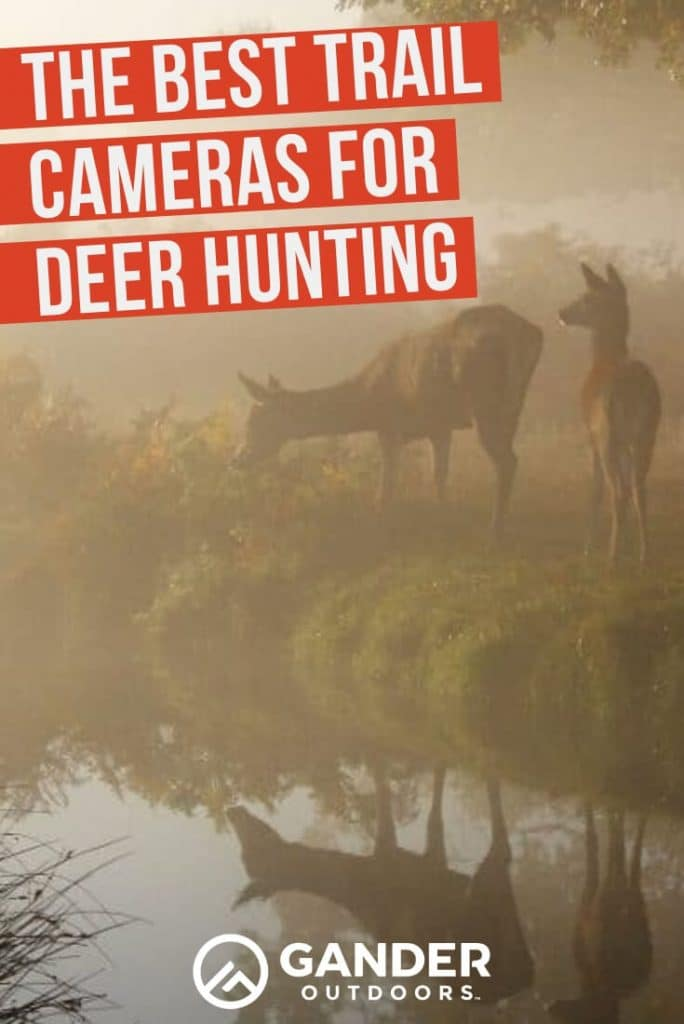 The best trail cameras for deer hunting