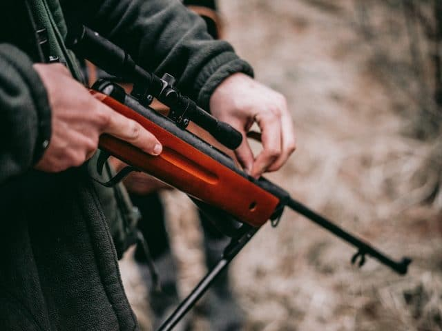 5 Best Air Rifles for Squirrel Hunting