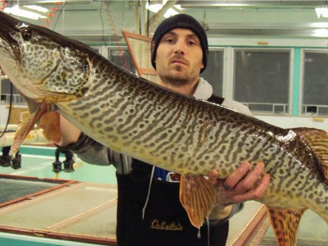 Man in black hat holding a Tiger Muskie