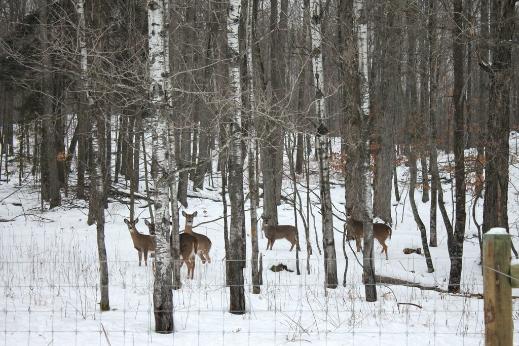 group of deer in the snow